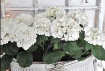 white / Love white