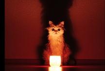 Halloween / by CindylivingbyHisword Mikuls