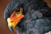Birds of Prey / by StudioWagle