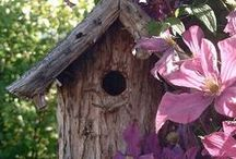 Bird houses / by Jane & Jerry Ratliff