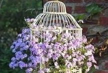 Bird Cages / by Jane & Jerry Ratliff