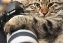 Cute animals =^-^=