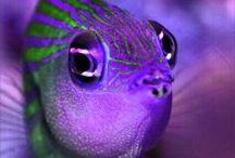 Purple / Aubergine (eggplant), grape, lavender, lilac, mauve, violet, orchid, plum, neon, deep, bright, pastel, and more.  The color of magic, good judgment & spiritual fulfillment. / by Hafapea
