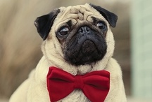 Pugs not Drugs / by Maureen Armour
