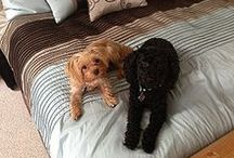 For Buster, Ally & Stella / Buster is my 1 1/2 yr old Morkie and Ally is my 4 yr  old poodle!