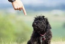 Small Dog Training Tips / Tips for your Well-Behaved Small Dog:  Training for the Non-trainer