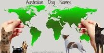 Dog Names / Need a Wonderful Name for that New Puppy?  Names Galore for dogs