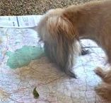 Out and About with Fido / Things to do, Places to go with your favorite dog
