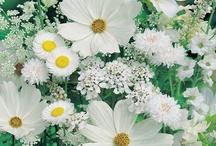 Garden inspirations / by Debbie Rochon