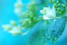 Flower Magic: B&W!