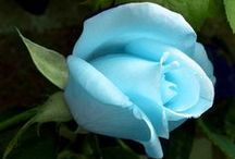 Flower Magic: Blue!