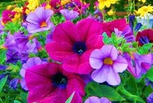 Flower Magic: Mixed!