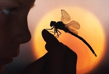 "Dragonfly Magic! / ""Reflected in the dragonfly's eye -- mountains."" ~Kobayashi Issa"
