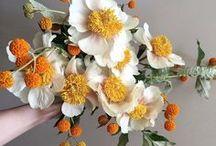 Fuss Free Flowers