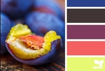 color palettes / by Dara Harvey