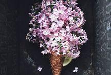 [ spring ]