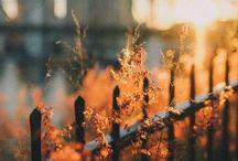 [ autumn ]