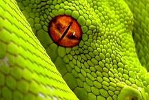 Reptilians /  & amphibians