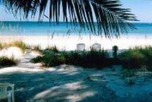 Beach & Ocean Life