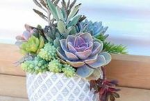 Succulents / Succulents are the perfect plant to help spruce up your home. Here's a few of our favorite arrangements. Make sure to repin them onto your own boards! #succulents #greenhomedecor