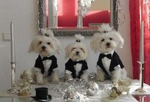 Make Me Happy / Check out my blog @ http://peacemanor.blogspot.com or check out photos of our 2 Maltese & 2 Shih Tzus on Instagram @ https://www.instagram.com/peacemanor/