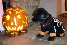 Halloween / by Carol Kline