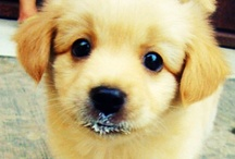 Puppies and other furriness / by Charlotte D.