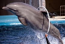 Dolphins love Seren / by Noelle Carter