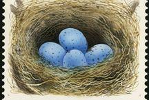 Nest / by Jammy Dodger