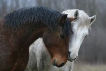 Horses / Majestic creatures. Beautiful each and everyone. / by Marcea S