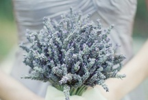Love for Lavender  / Lavender themed ideas for weddings and parties