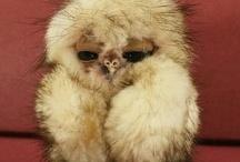 Owl Inspired♡