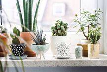 home {plant life}