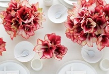 Entertaining & Tabletop / by Leah Zanville