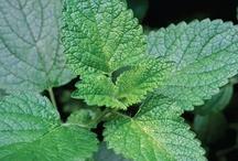 Herbs / by Diane McKenzie