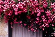petals / by Denny Nunn