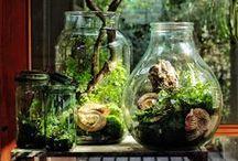 Terrariums / Bottled Gardens