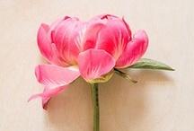 P L A N T S . & . F L O W E R S / Pretty Flowers and Plants