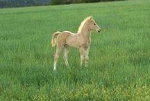 Horses! / by bobbi houle