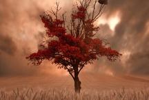 autumn:best season of the year / by Despoina Moisiadou