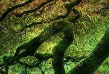 Amazing Nature / by Carmen Sanz