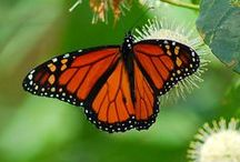 Butterflies, Humming Birds and Dragonflies Oh MY~ / by Betty Ray Shassberger