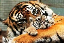 The World    The Animal Kingdom