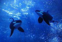 The World    Underwater World
