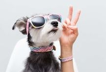 Doggy Style / Fashion and accessories for stylish canines.