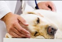 Pet Health and Happiness / Health and Wellbeing for Dogs and Cats