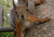 Squirrels, Chipmonks, Hamspters & Mice / by Jane Vaughn