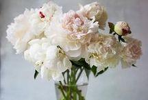 I wish I had a garden / by Hayley Dorothy Sumblin Sasser