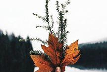 Fall & Winter