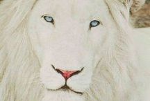 Animals - My Style Nature / Amazing animals, beautiful albinos and other animals I find interesting.
